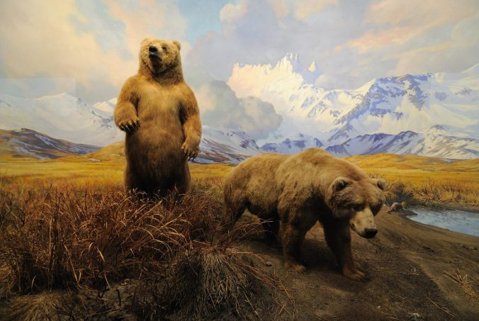american-museum-collection-bear