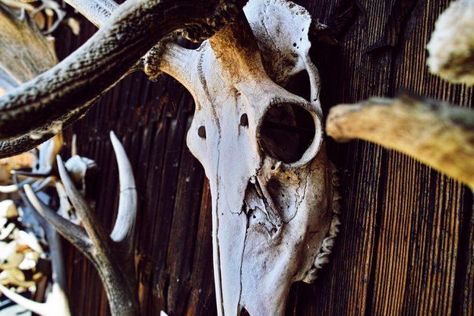 dead-animal-head-trophy