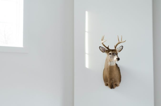 deer-mount