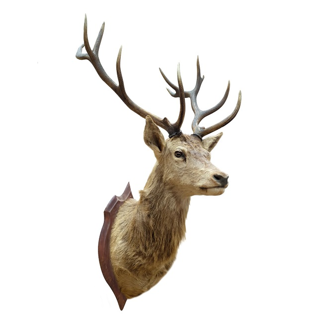 Which Bones Are Viable for Taxidermy?
