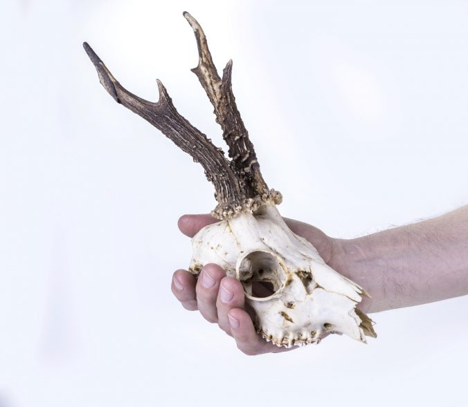 What Is Skull Cleaning?