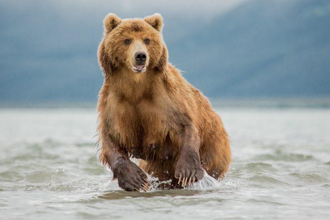 she-bear-hunting-and-fishing