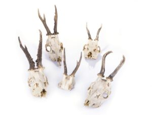 DIY Taxidermy for Trophy Skull Cleaning