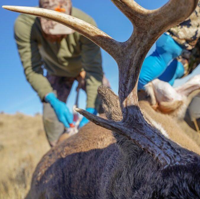 two-male-deer-hunters-prepare-to-skin