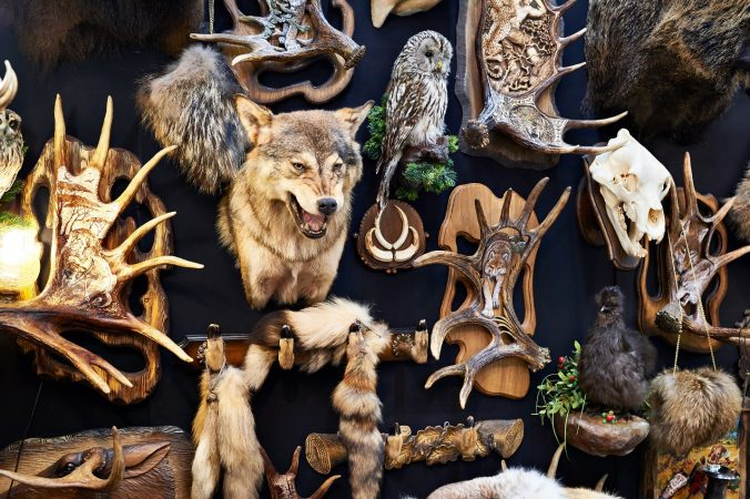 wall-with-hunting-trophy